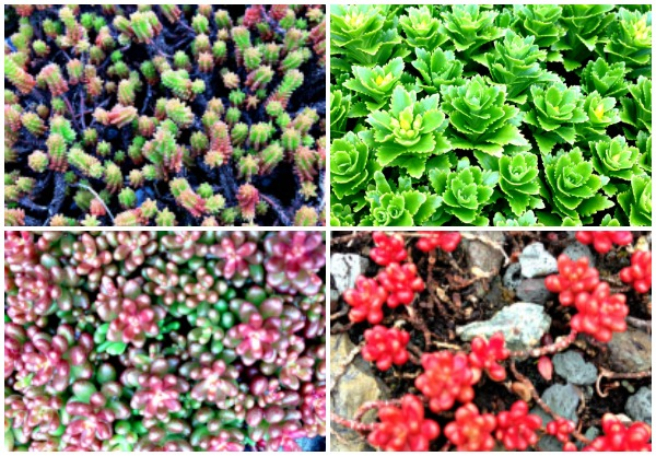 GreenRoofCollage